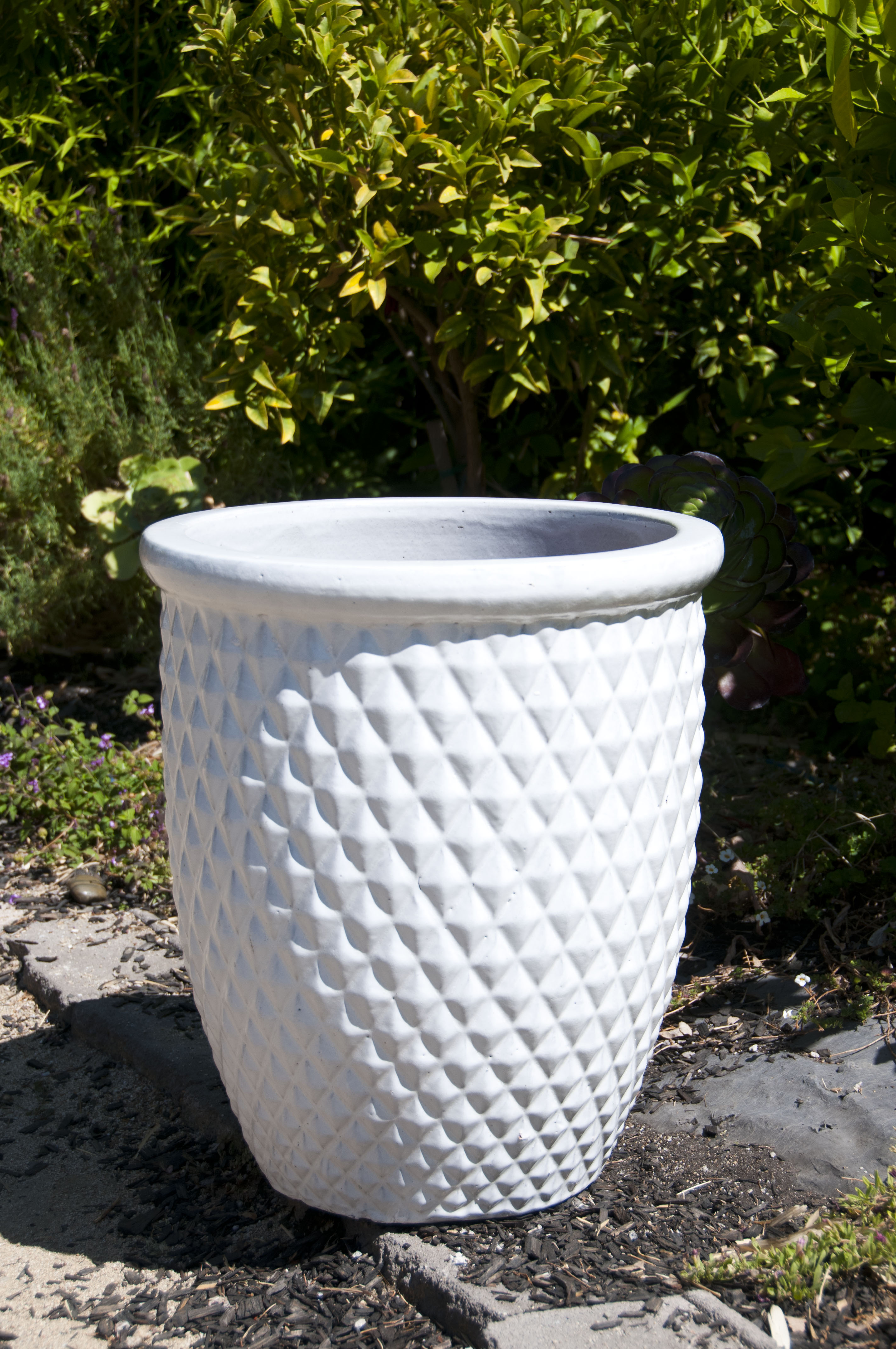 Diamond Canna Planter